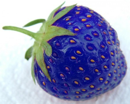 Blue Strawberry