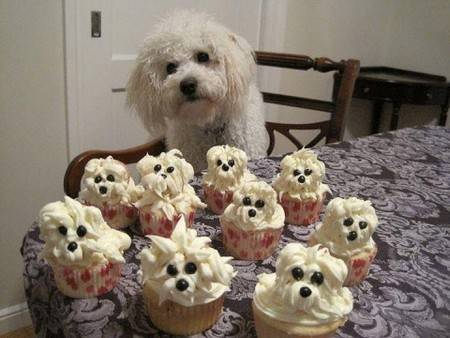 cupcakes of fluffy white dogs