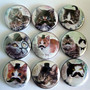 Set of Nine Cats with Mustaches Button Magnet Set----Gift Tin Included