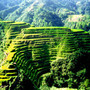 Philippines - Rice Terrace Fields in Banaue