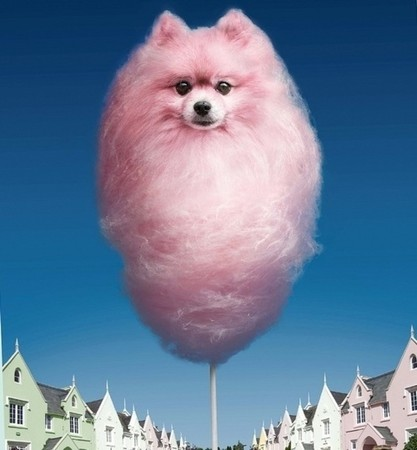 Cotton dog candy.