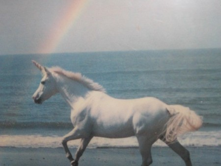 unicorn & rainbow