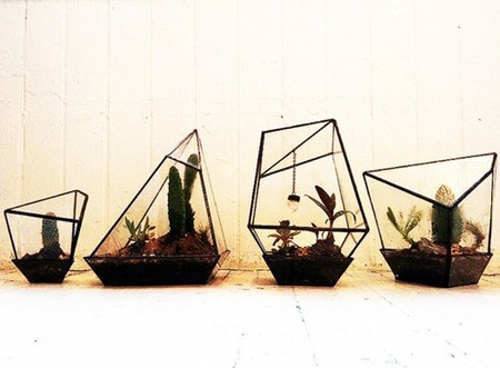 Assembly New York - Geometric Terrariums